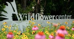 Ladybird Wildflower Center Team Building
