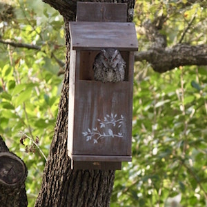 Owl Box -customizable